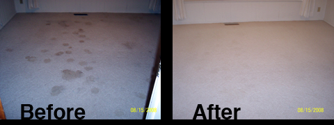 Carpet Cleaning | Canon City CO | 719-315-2437
